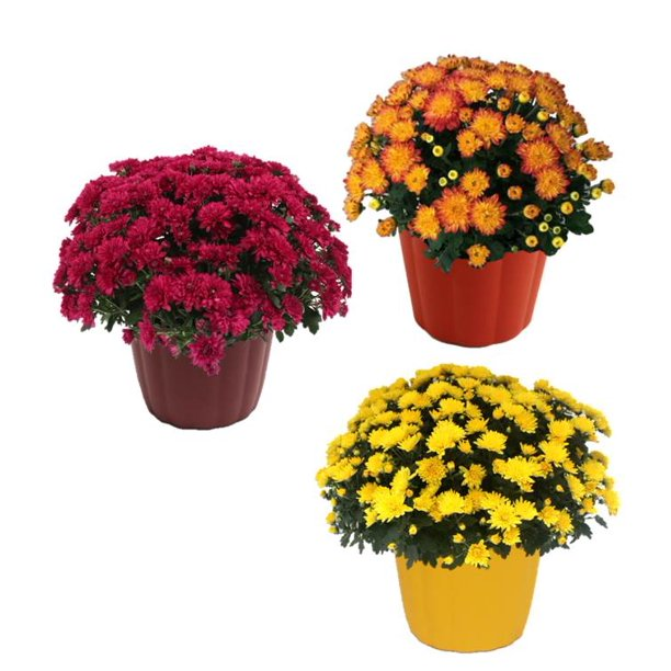 Fall Flower Fundraiser is NOW!